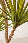 Yucca 6' Potted Faux Tree #2