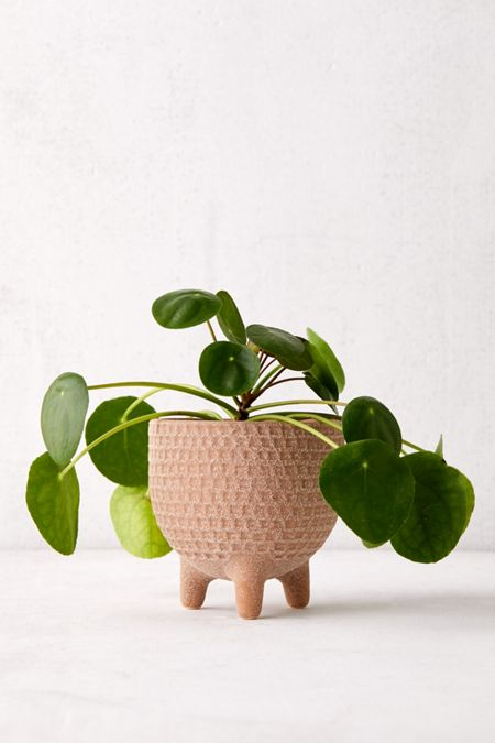 Terrariums + Indoor Planters | Urban Outers on house plants in containers, tropical plants in vases, house plants in kitchen, green plants in vases, aquatic plants in vases, growing plants in vases, fake plants in vases, water plants in vases,