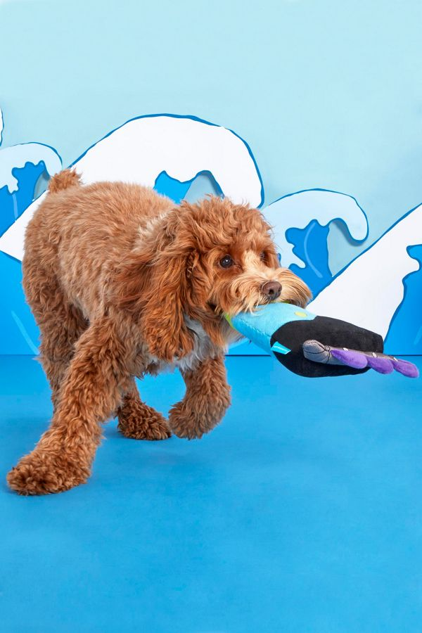 Bark Need For Speed Skate Dog Toy