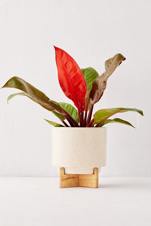 Slide View: 1: Cecily 6â?� Planter + Stand