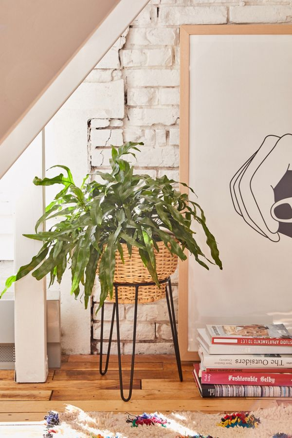 Slide View: 1: Yara Wicker Planter + Stand