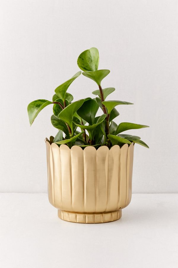 Slide View: 1: Viola Metal Planter