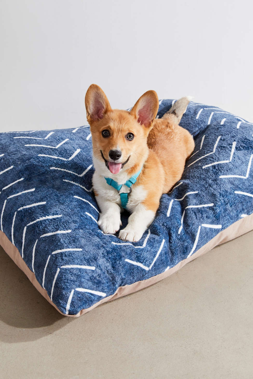 Slide View: 1: Becky Bailey For Deny Big Arrows Pet Bed