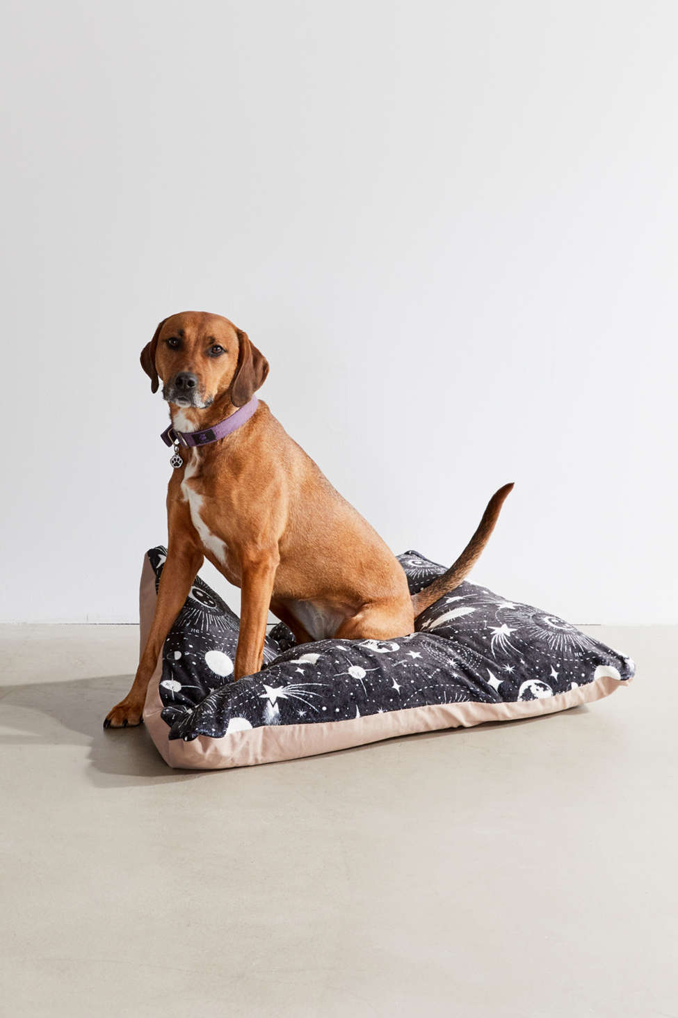 Slide View: 1: Heather Dutton For Deny Solar System Pet Bed
