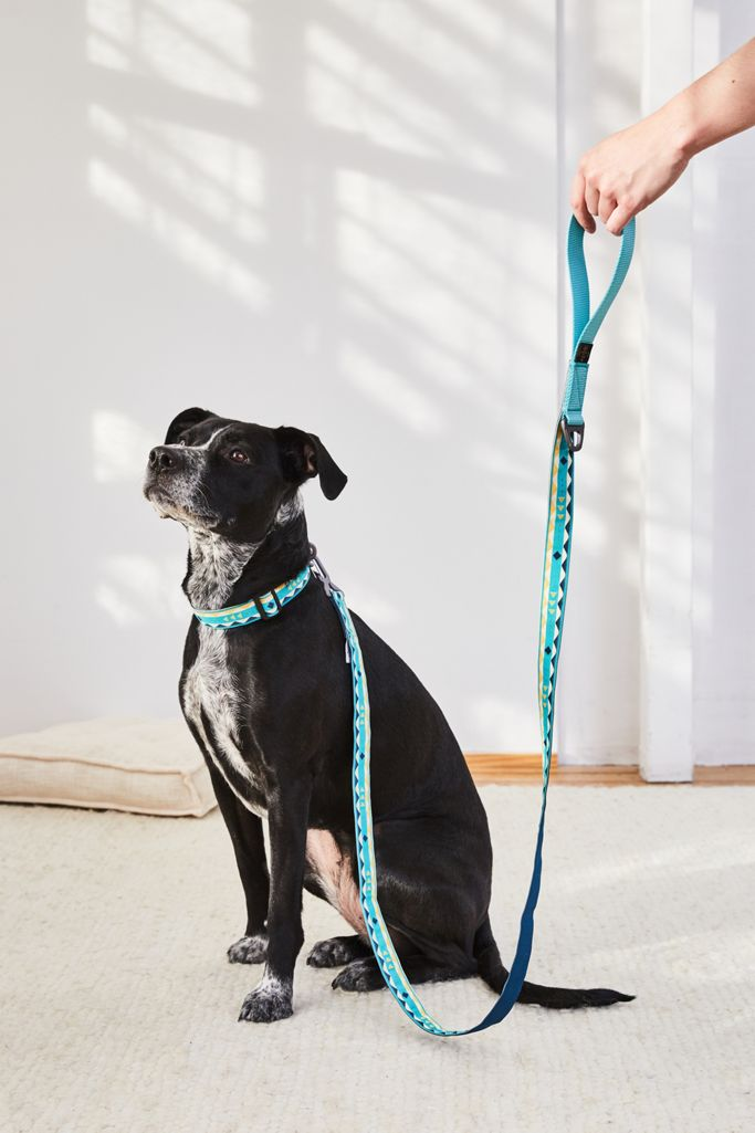 United By Blue Dog Leash | Urban Outfitters