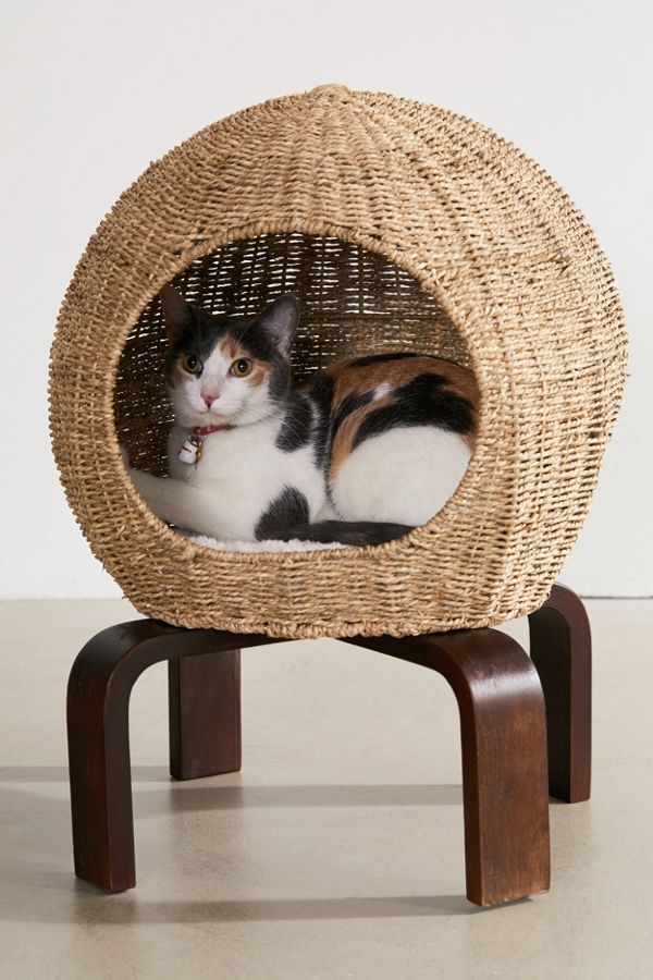 Slide View: 1: Cat Pod