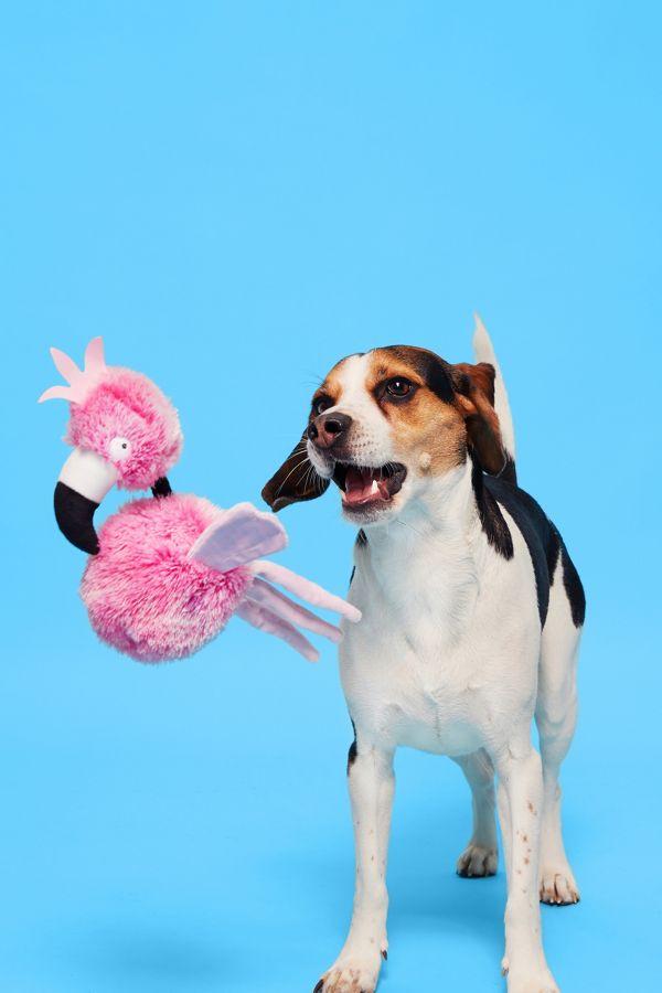 Slide View: 2: BARK Bert of Paradise Dog Toy