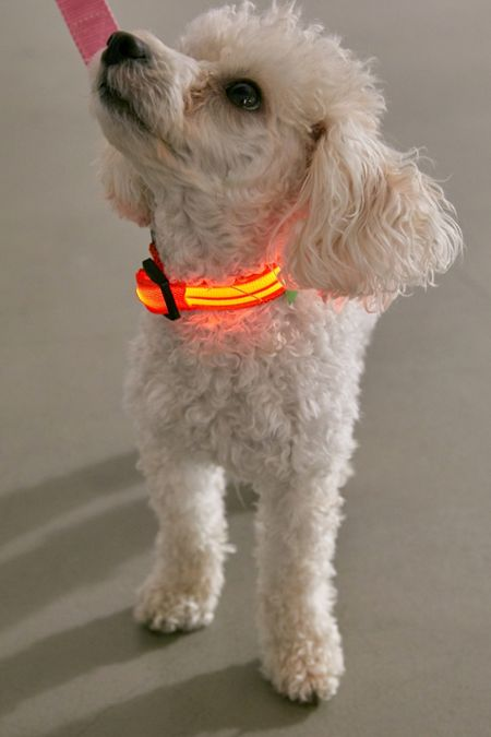 Pet Accessories + Supplies | Urban Outfitters