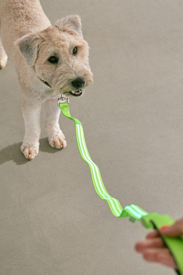Slide View: 1: Illumiseen LED 4 ft Dog Leash