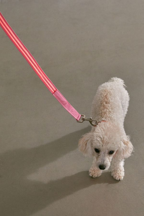 Slide View: 2: Illumiseen LED 4 ft Dog Leash