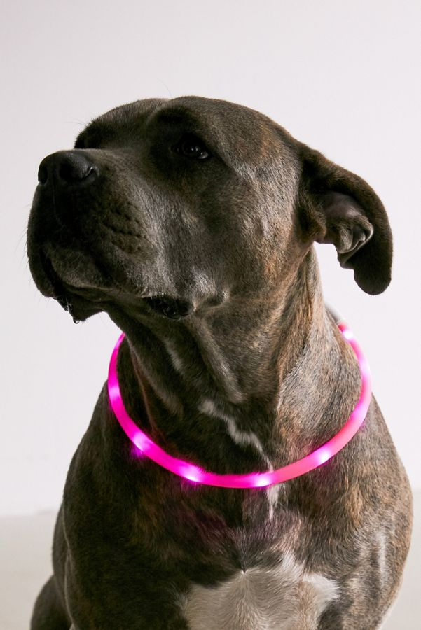 Slide View: 1: Illumiseen LED Dog Collar Necklace