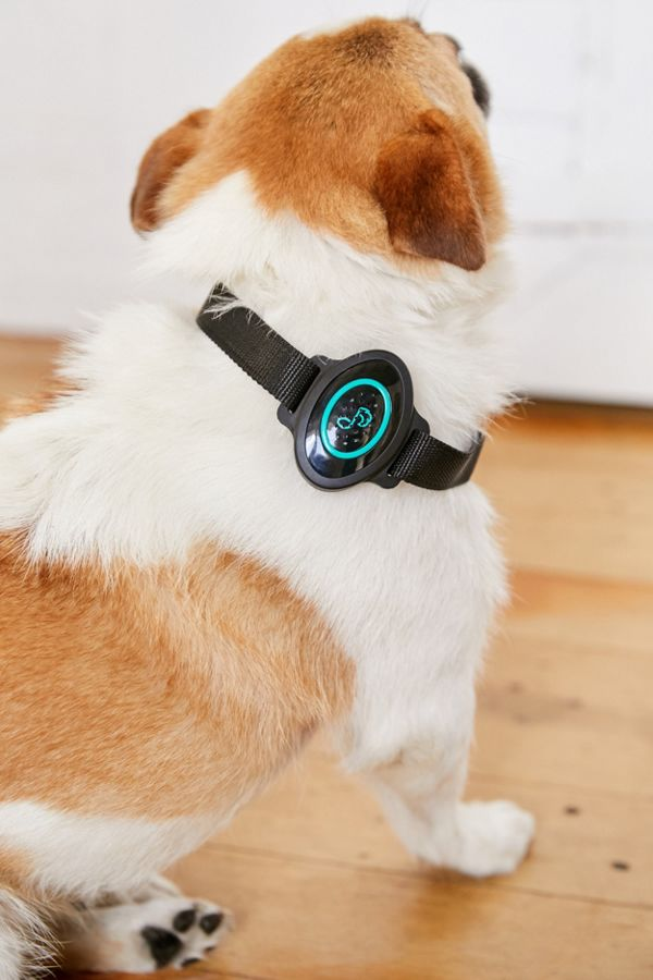 Slide View: 1: Pet Acoustics Ultra Calmer Collar