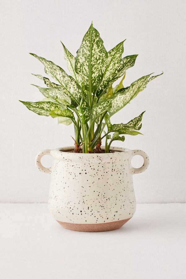 "Slide View: 1: Kiera Speckled Ceramic 6"" Planter"