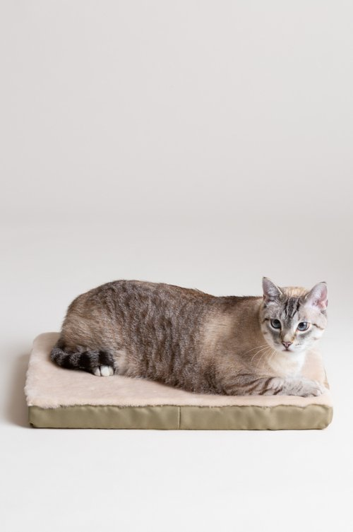 "Overland 14"" x 20"" Small Sheepskin Pet Cushion"