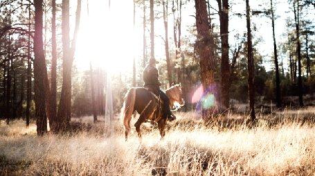 aniela gottwald riding wild