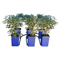 Growing Systems, Tents & Trays